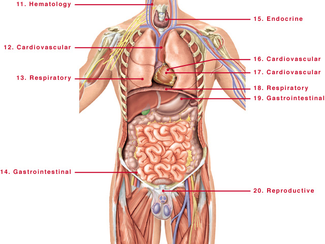 Male Human Body Parts